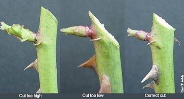 Come effettuare il taglio