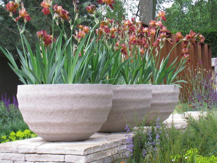 Semina piante fiore tecniche di giardinaggio semina - Fiori da giardino al sole ...