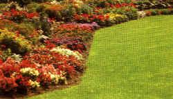 Seminare perenni a marzo speciali semina giardino for Fiori perenni per giardino