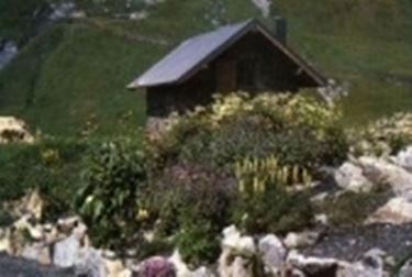 Alpino Chanousia