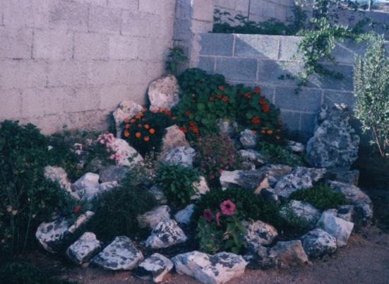 Help come creare un giardino roccioso forum di - Giardino roccioso foto ...