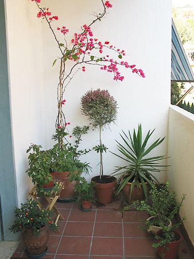 Consiglio fiori da balcone  Forum di Giardinaggio.it