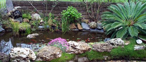 Come vorrei il mio laghetto forum di for Alghe laghetto artificiale