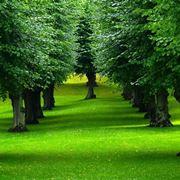 Introduzione agli alberi