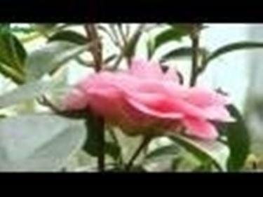 Introduzione Arbusti e Acidofile