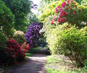 Arbusti e piante acidofile