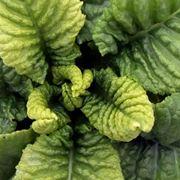 Carenza ferro nelle piante