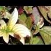 Introduzione carenze delle piante