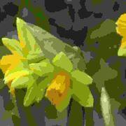 Coltivare i bulbi in vaso