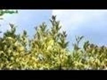 Introduzione alla piantumazione degli arbusti