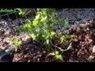 Irrigazione piante e arbusti
