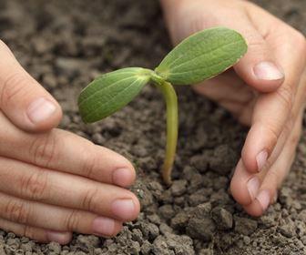Come piantare gli alberi