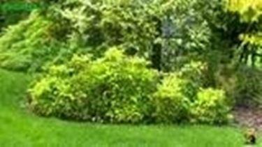 Come progettare un giardino ombreggiato