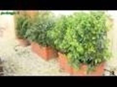piantumazione concimazione e irrigazione