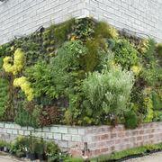 Cura e manutenzione del giardino verticale