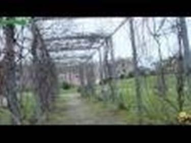 Introduzione giardini verticali