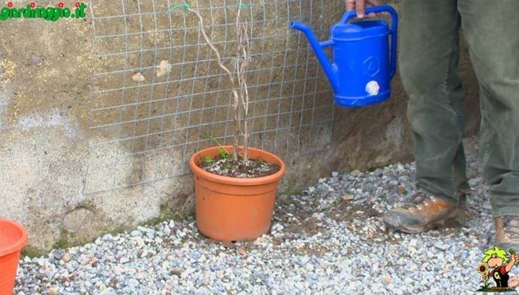Scelta piante per verde verticale