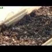 piantumazione concimazione irrigazione