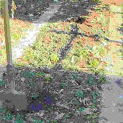 Come coltivare l'orto nelle aiuole
