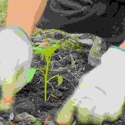 Introduzione alla coltivazione dell