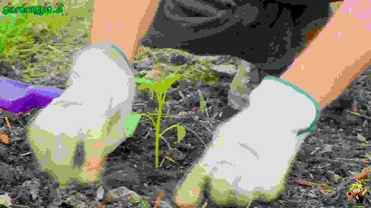 Introduzione alla coltivazione dell'orto