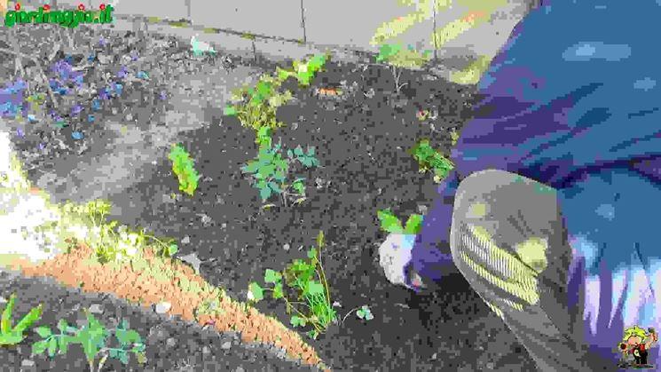Piantare piante da orto