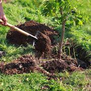 come piantare le piante