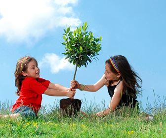 Piantare le piante