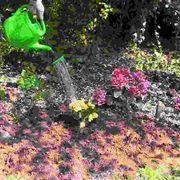 Coltivazione piante annuali