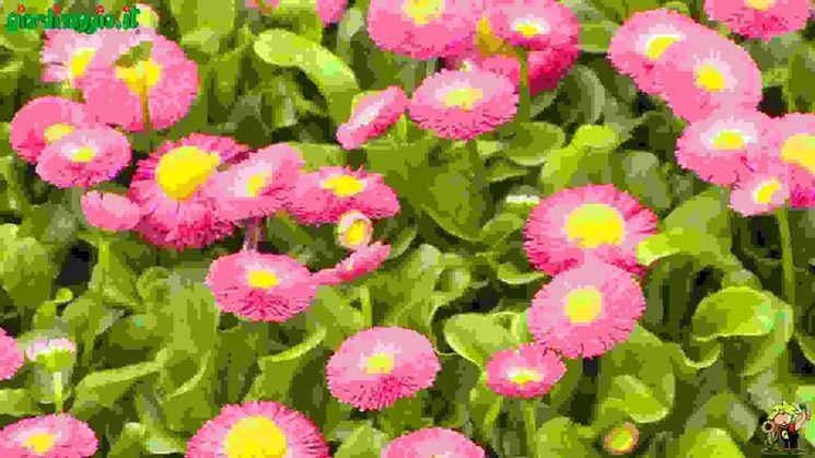 piante annuali e biennali