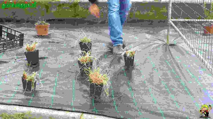 Creare aiuole di perenni piante perenni come creare for Piante x aiuole