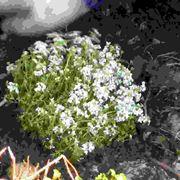 Introduzione alle piante perenni