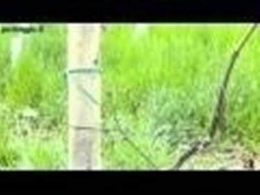 coltivazione delle rampicanti