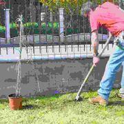 Posizionamento e sostegni piante rampicanti
