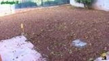 Lavorazione, sminuzzatura e livellatura del terreno tramite rastrello