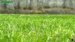 primo taglio erba