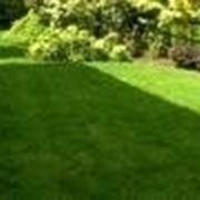 Valutazione del terreno e scelta del tipo di erba