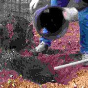 Come piantare una pianta