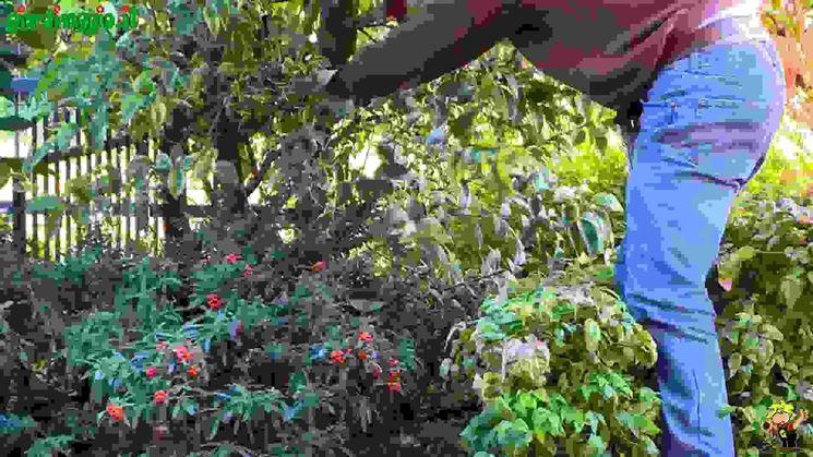 Come potare le piante - Tecniche di giardinaggio