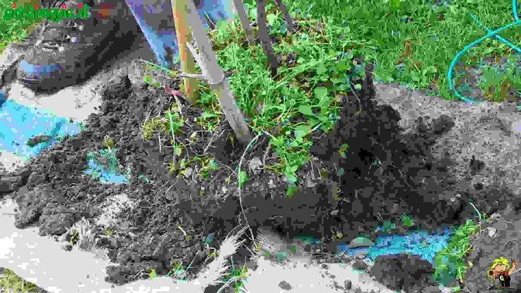 Trapiantare una pianta