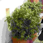 Divisione delle piante
