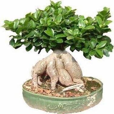 bonsai da talea