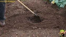 coltivare carciofi