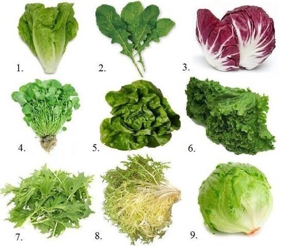 coltivare insalata video orto frutteto coltivare
