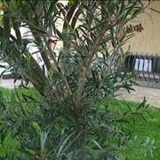coltivare piante in vaso