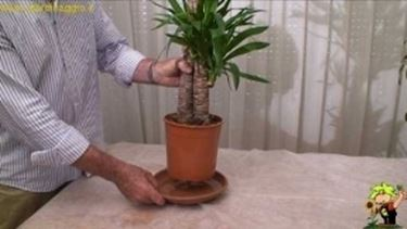 Come annaffiare le piante da appartamento video piante for Annaffiare le piante