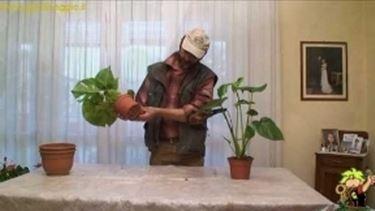 piante con foglie grandi