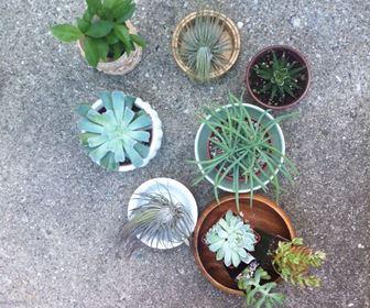 video piante grasse