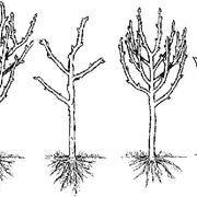 potatura piante da frutta