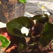 vasi da fiore